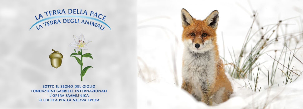 Header-Winter-it-fuchs