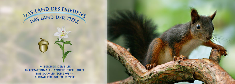 Header-herbst-de-eichhörnchen-1