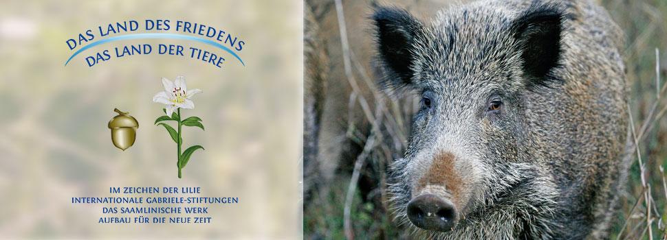 Header-herbst-de-wildschwein-1