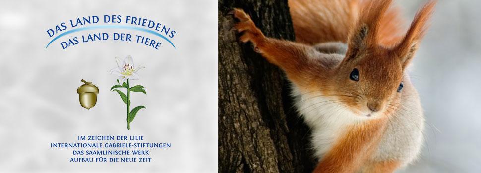 Header-winter-de-eichhörnchen2