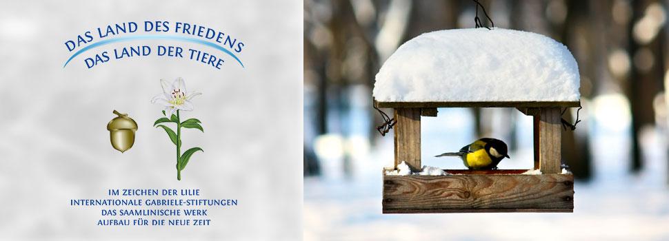 Header-winter-de-maise-kasten