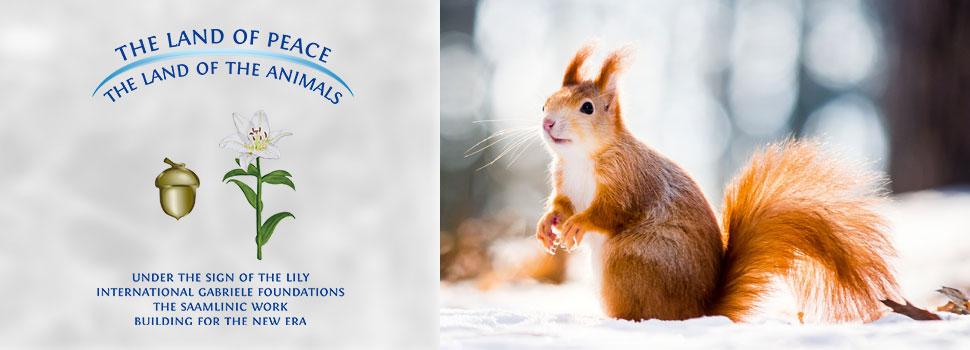 Header-winter-en-eichhörnchen