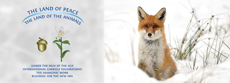Header-winter-en-fuchs
