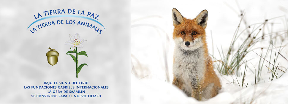 Header-winter-es-fuchs