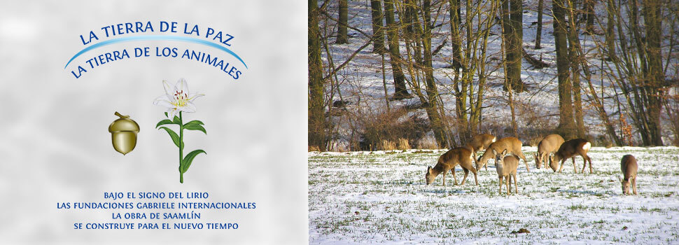 Header-winter-es-rehe