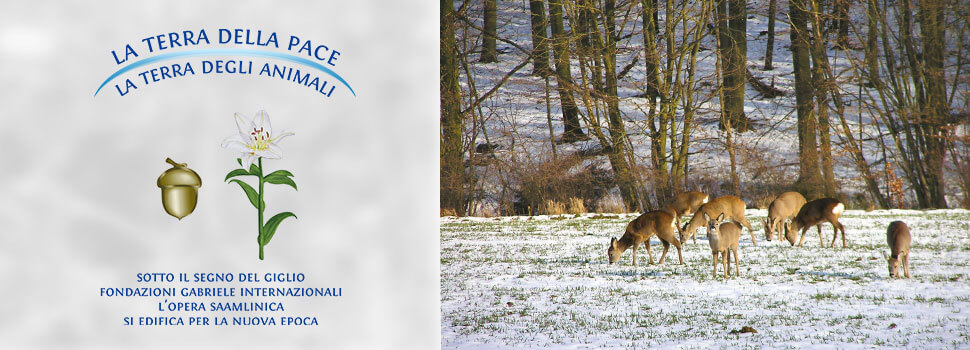 Header-winter-it-rehe