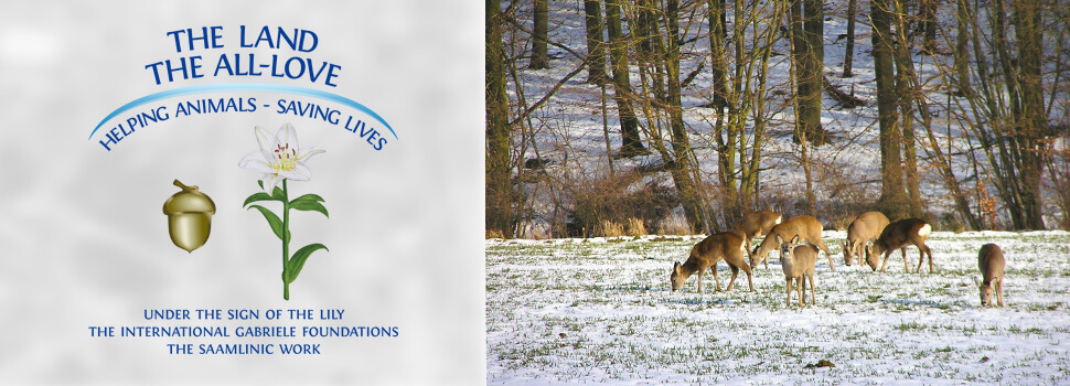 en-header-winter-rehe