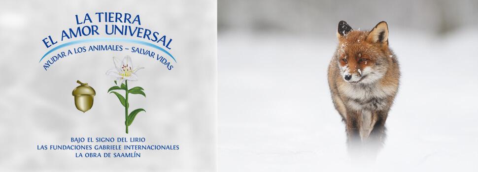 es-header-winter-fuchs