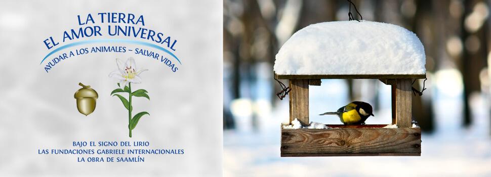 es-header-winter-maise-kasten