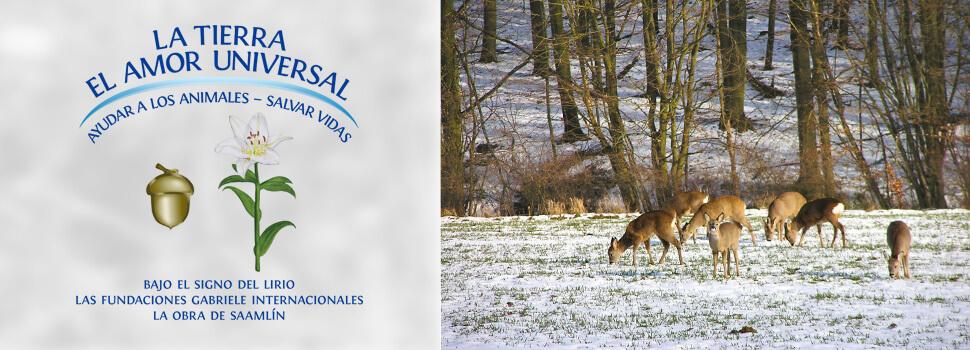 es-header-winter-rehe