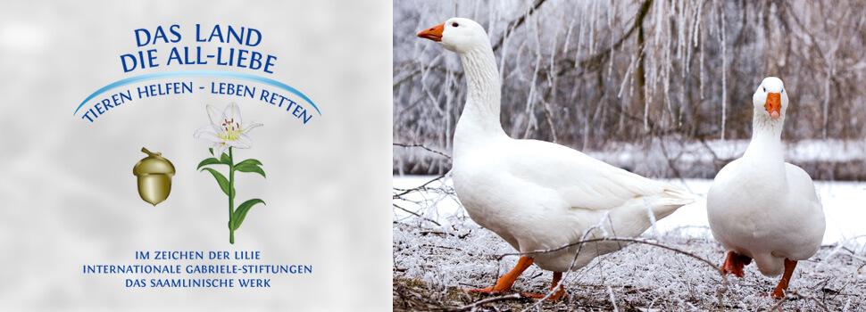 header-winter-gaense