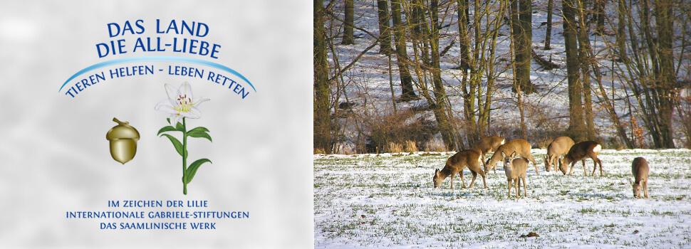 header-winter-rehe