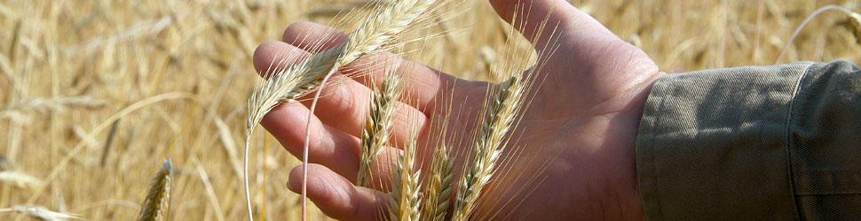 Urchristliche Landwirtschaft